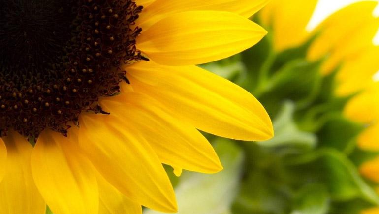 ทายนิสัย จากดอกไม้ที่คุณชอบ - จากดอกไม้ 12 ชนิดนี้