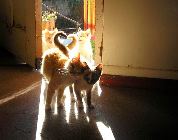 cat-couples-02