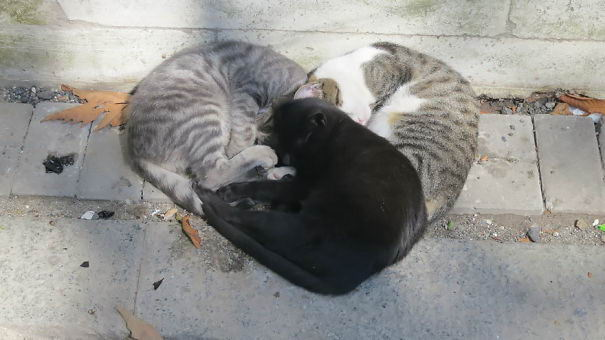 cat-couples-06