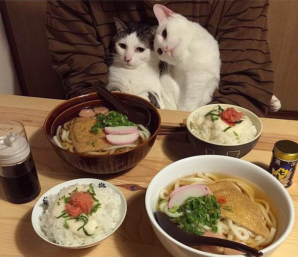 cat-couples-07