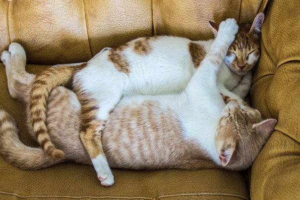 cat-couples-08