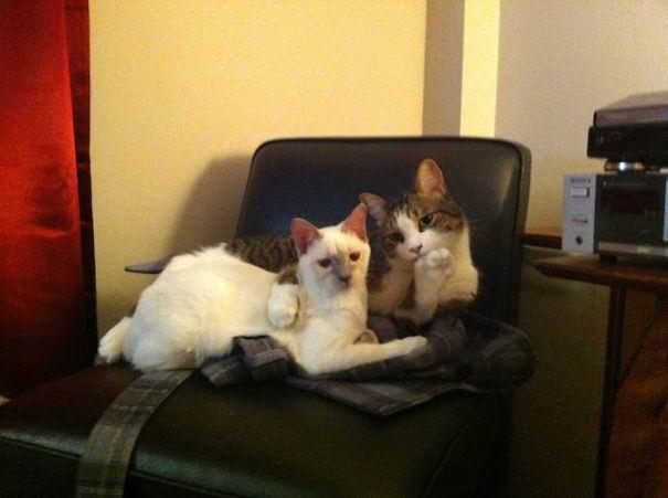 cat-couples-09