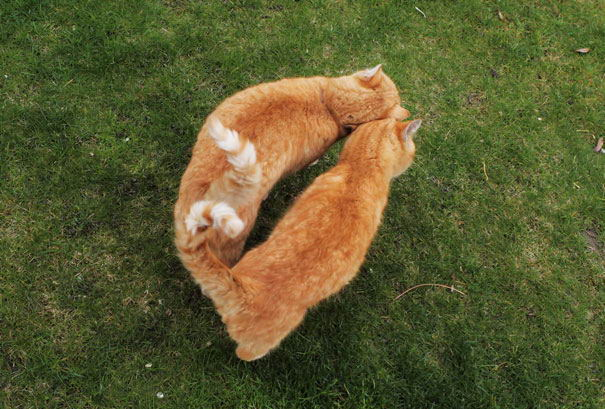 cat-couples-14