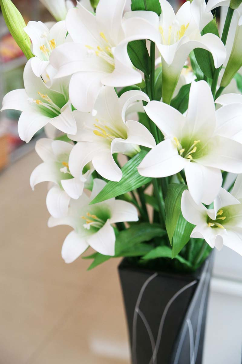 ดอกลิลลี่ขาว คาซาบลังก้า